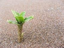 Planta en la arena fotografía de archivo