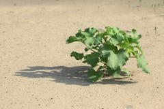 Planta en la arena Imagenes de archivo