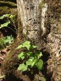 Planta en la base de un árbol Fotografía de archivo libre de regalías