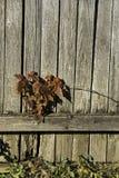 Planta en la cerca de madera foto de archivo