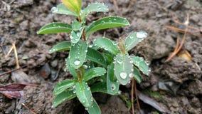 Planta en la lluvia fotos de archivo libres de regalías