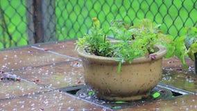 Planta en la lluvia en una tabla almacen de metraje de vídeo