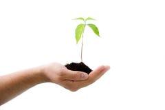 Planta en la mano masculina Fotos de archivo