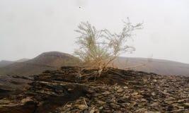 Planta en la montaña en Marruecos foto de archivo libre de regalías