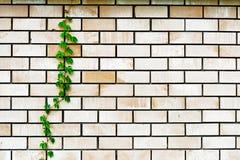 Planta en la pared Fotos de archivo libres de regalías