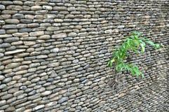 Planta en la pared de la roca imagen de archivo libre de regalías