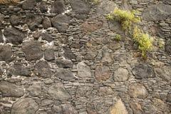 Planta en la pared de piedra stock de ilustración