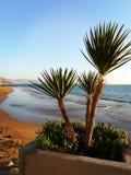 Planta en la playa fotos de archivo