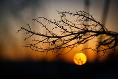 Planta en la puesta del sol Fotos de archivo