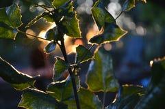 Planta en la puesta del sol Fotos de archivo libres de regalías