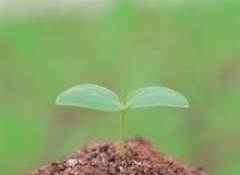 Planta en la tierra Imagen de archivo libre de regalías