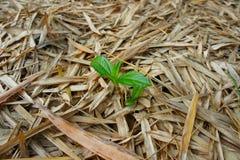 Planta en las hojas de bambú Imagenes de archivo