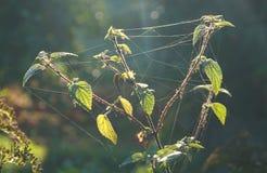 Planta en luz del sol fotos de archivo libres de regalías