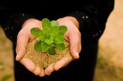 Planta en manos Fotografía de archivo libre de regalías