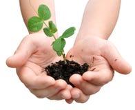 Planta en manos Imagen de archivo