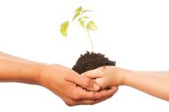 Planta en manos Foto de archivo