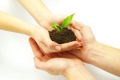Planta en manos Fotos de archivo libres de regalías