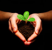 Planta en manos Imagen de archivo libre de regalías