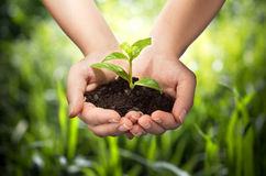 Planta en manos - fondo de la hierba imagen de archivo