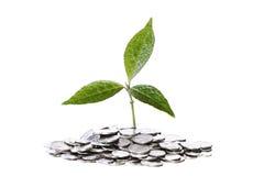 Planta en monedas Imágenes de archivo libres de regalías