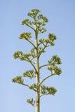 Planta en naturaleza Imagen de archivo libre de regalías