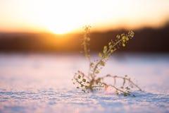 Planta en nieve Imágenes de archivo libres de regalías