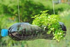 Planta en potes diy foto de archivo libre de regalías