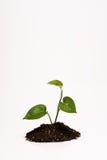 Planta en suciedad Imagenes de archivo