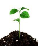 Planta en suelo fotos de archivo