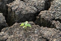 Planta en tierra agrietada de la arcilla Foto de archivo libre de regalías