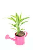 Planta en tuerca Imagen de archivo libre de regalías