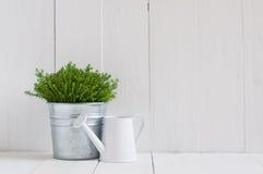 Planta en un pote y una regadera del metal Foto de archivo libre de regalías