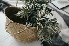 Planta en una cesta de mimbre del vintage Foto de archivo libre de regalías
