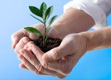 Planta en una mano Imágenes de archivo libres de regalías