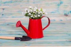 Planta en una regadera y un utensilio de jardinería rojos Fotos de archivo