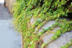 Planta encaracolado Imagem de Stock