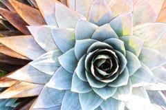 Planta endémica del montaje Roraima Foto de archivo libre de regalías