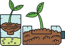 Planta engarrafada Imagem de Stock