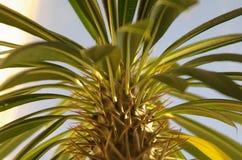 Planta espinhosa Imagem de Stock Royalty Free