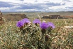 Planta espinhosa de florescência em um fundo das montanhas Imagens de Stock Royalty Free