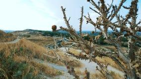 Planta espinosa secada del cardo en las cercanías de la ciudad almacen de metraje de vídeo