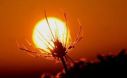 A planta está absorvendo o sol foto de stock royalty free