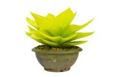 A planta está no potenciômetro Foto de Stock