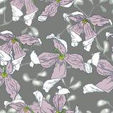 Planta exótica Imagenes de archivo