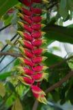 Planta exótica Fotografia de Stock Royalty Free