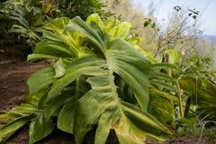 Planta exótica Imagens de Stock Royalty Free