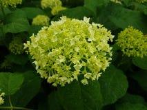 Planta exterior botânica pequena da guarda florestal do couro cru fotografia de stock royalty free