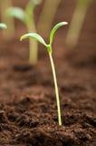 planta för grön livstid för begrepp ny arkivbilder