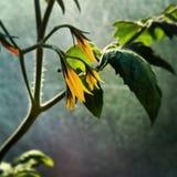 Planta feericamente roxa Imagem de Stock Royalty Free