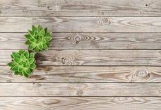 Planta floral mínima da planta carnuda da configuração do plano imagem de stock